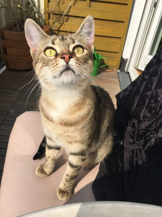 Bengal-Mix: Bei Blacky am Balkon